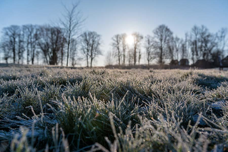 Gras, Bodenfrost und Sonne